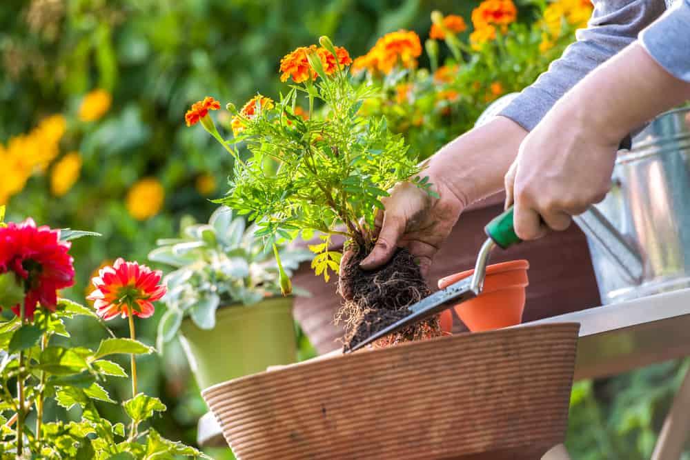 sadzenie roślin w ogrodzie